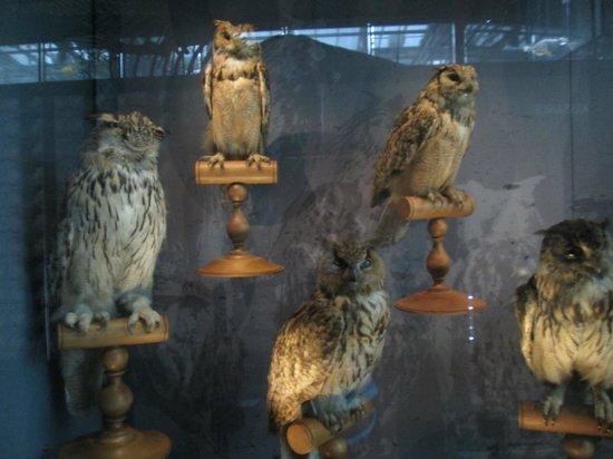 Musée d'histoire Naturelle : Une partie des animaux ( 1 sur des milliers)
