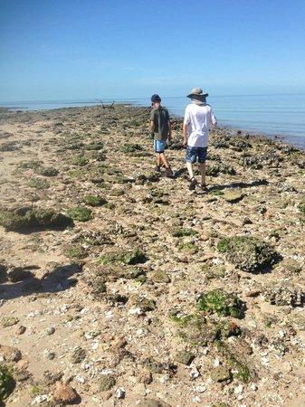Everglades Area Tours : the boys exploring