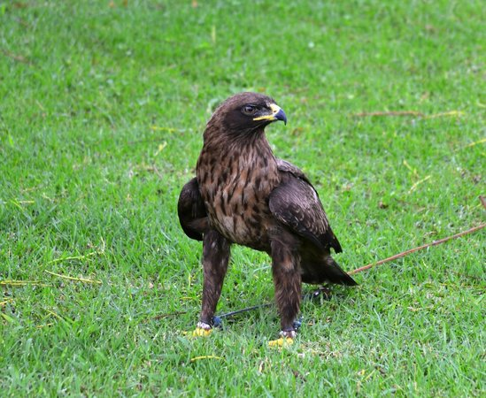 Falcon Ridge Bird of Prey Centre: Falcon Ridge