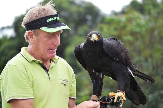 Falcon Ridge Bird of Prey Centre: The gorgeous black eagle