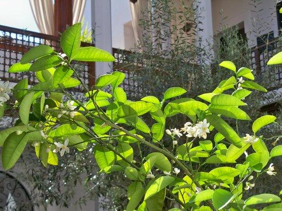 Bellamane, Ryad & Spa: fiori d'arancio nel patio