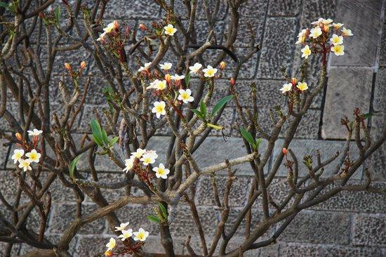 Museo de las Culturas de Oaxaca: Spring in the yard