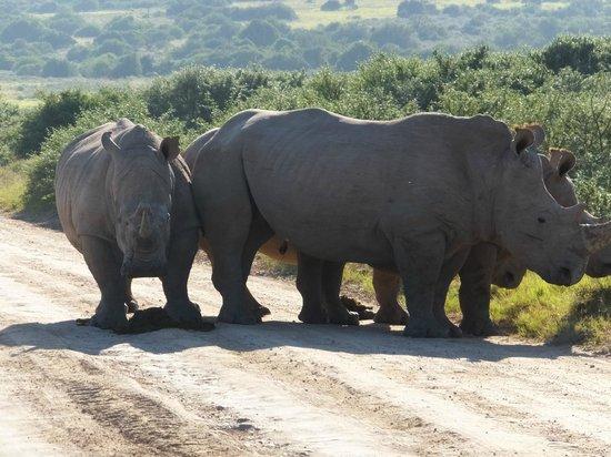 Shamwari Game Reserve Lodges: Road block