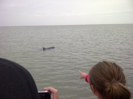 Adventure Cruises Inc.: Just one of many dolphins!