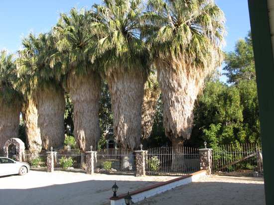 Campbell House: Gorgeous palm trees on the grounds