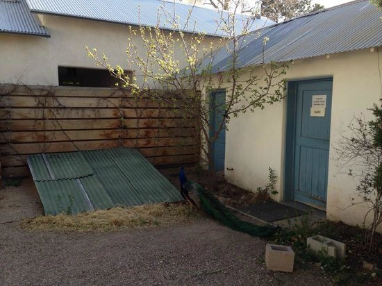 Los Poblanos Historic Inn & Organic Farm : Peacock