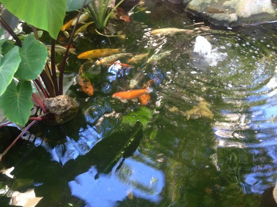 White Sands Hotel: Fish in the pond
