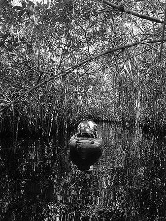 Everglades Area Tours : Mangrove tunnel
