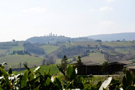 Walkabout Florence Tours: Winery View