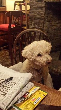 Chichester Arms: jix enjoying the ambience and the crossword