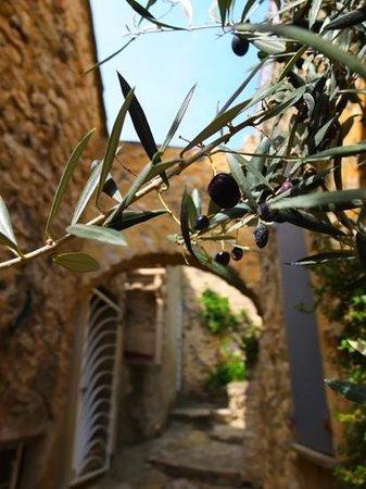 La Maison d'Eglantine Salon de The: des olives bien mûres