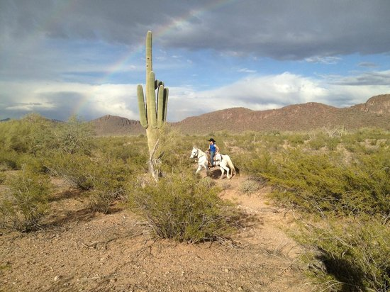White Stallion Ranch: Rider in the desert