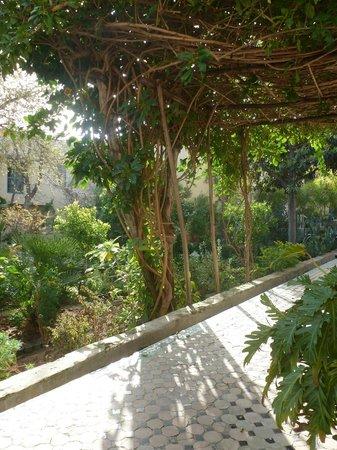 Le Jardin des Biehn : allée du jardin