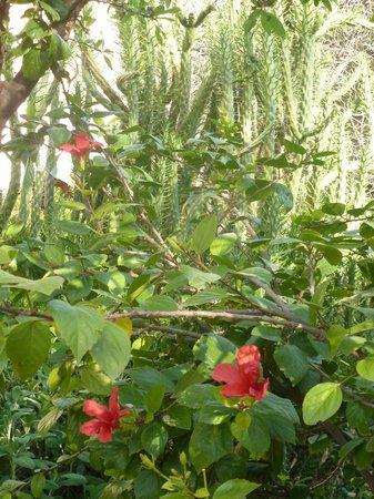 Le Jardin des Biehn : jardin