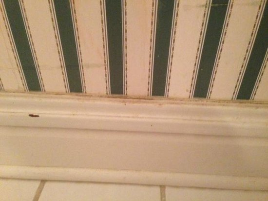 Tara - A Country Inn: Bathroom wall and baseboard