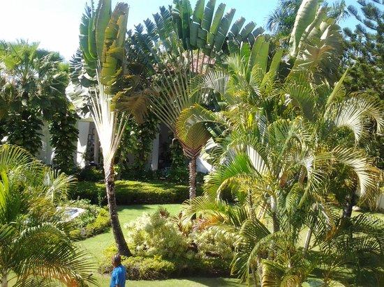 BlueBay Villas Doradas Adults Only : garden in front of room 5204
