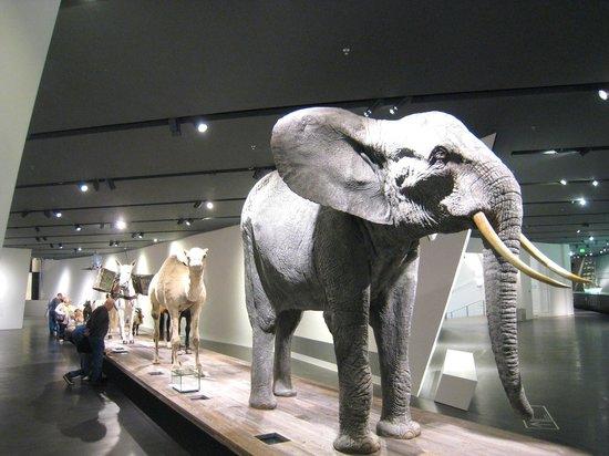Militärhistorisches Museum der Bundeswehr Dresden: Animals in war