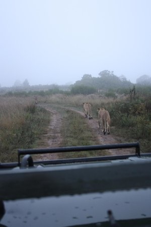 Gondwana Game Reserve: Game we saw