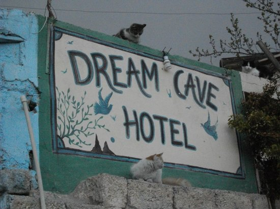 Dream Cave Hotel : hotel kitties