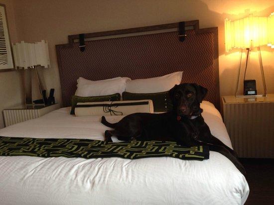 Kimpton Hotel Palomar Philadelphia : View of bed (Kona Dog says hi)