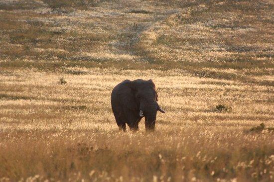 Shamwari Game Reserve Lodges : Elephant