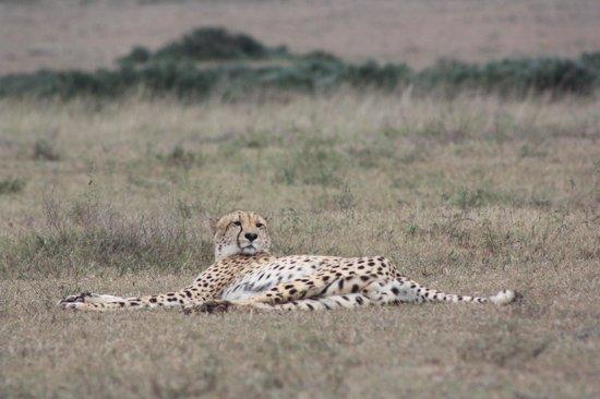 Shamwari Game Reserve Lodges: Cheetah