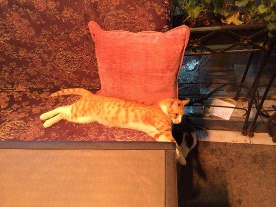 Tria Elegance Restaurant : Король заведения - кот