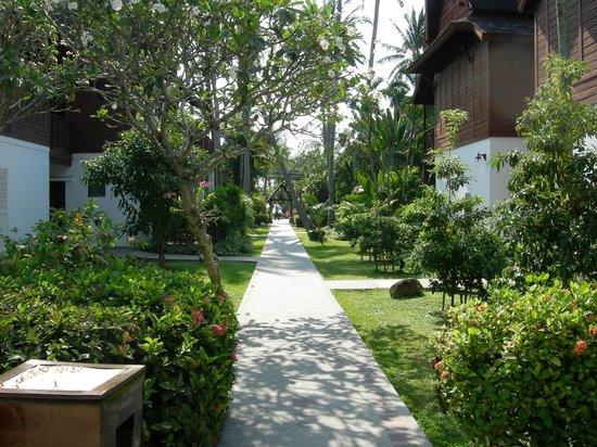 Amari Koh Samui: Zugang zum hinteren Pool - Gartenanlage