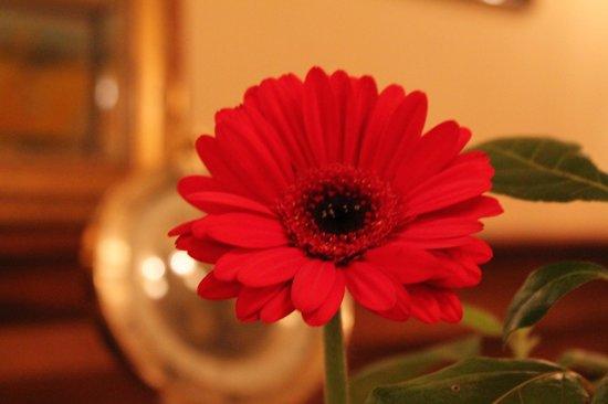 St hubert: Fleur a table...