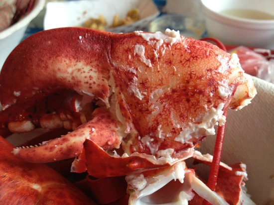 The Lobster Pool: Really Big Claws on the 1.5 lb Lobster