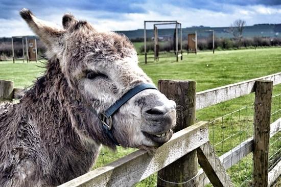 Playdale Farm Park : A happy donkey on the farm!