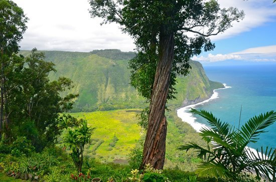 Waipio Rim: I could look at this all day