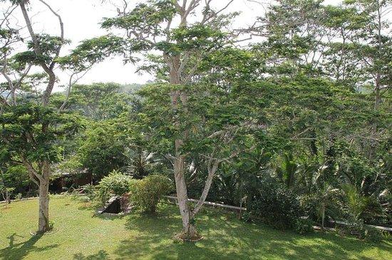 Niyagama House: Üppige Natur - Erholung pur