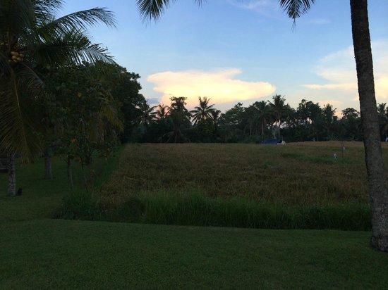 The Chedi Club Tanah Gajah, Ubud, Bali – a GHM hotel: The rice field at dawn