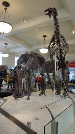 American Museum of Natural History : Dinos