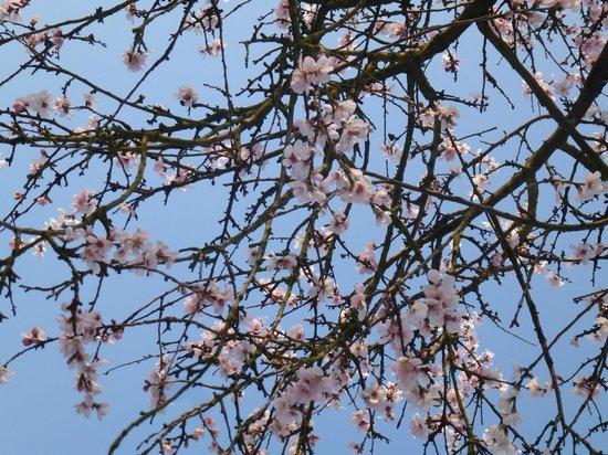 Palmengarten und Botanischer Garten: Сакура :)