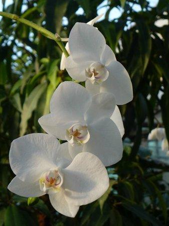 Palmengarten und Botanischer Garten: Орхидеи (из оранжереи)