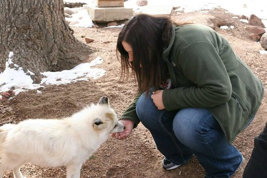 Colorado Wolf and Wildlife Center: Foxes