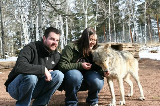 Colorado Wolf and Wildlife Center: Tala