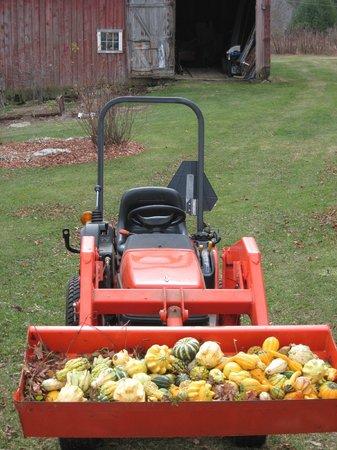 Maple House Bed & Breakfast : Fall gourd crop.