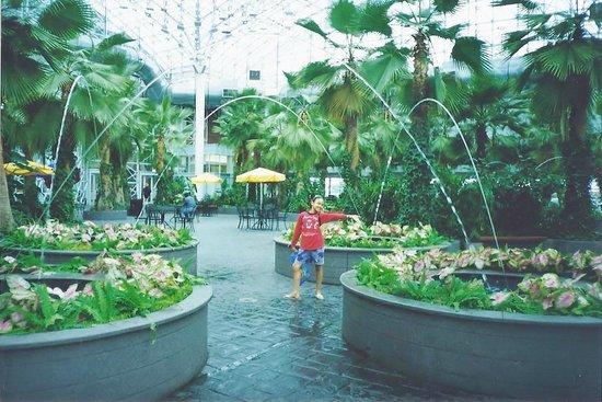 Navy Pier: Tea Garden with cute fountain sprinklers :-)