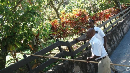 Boucan Restaurant & Bar by Hotel Chocolat : Beautiful cocoa fields...and scenery..