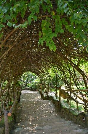 Somatheeram Ayurveda Resort: Contact with nature