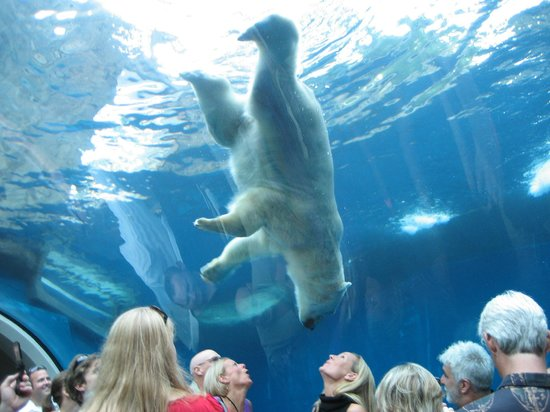 Pittsburgh Zoo & PPG Aquarium: Polar Bear