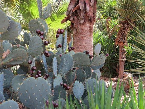 The Alamo: Gardens