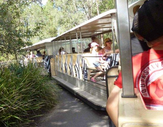 Australia Zoo : Saving legs! The zoo's shuttle bus is more like a train.