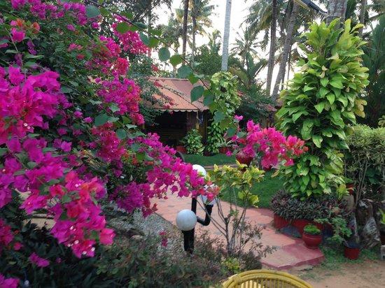 Beautiful Gardens In February Picture Of Kerala Bamboo