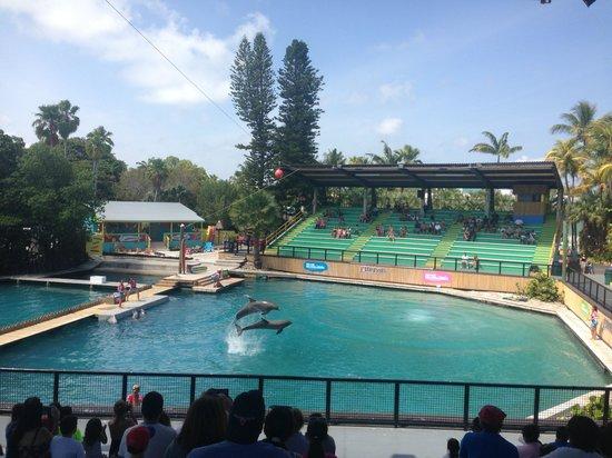 Miami Seaquarium: Flipper show