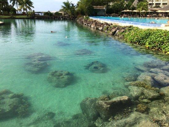 InterContinental Tahiti Resort & Spa: Lagoonarium