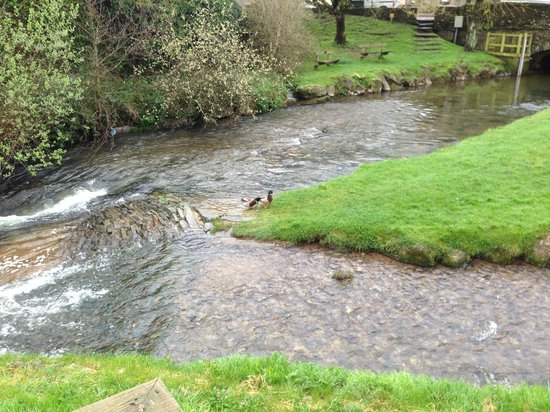 Harbertonford, UK: The river with ducks